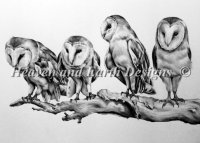 Barn Owls Material Pack